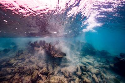 Arrecife-Francisco I-Madero-Snorkeling-Playa-del-carmen-Mexico-Gabe-DeWitt-42
