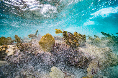 Arrecife-Francisco I-Madero-Snorkeling-Playa-del-carmen-Mexico-Gabe-DeWitt-175