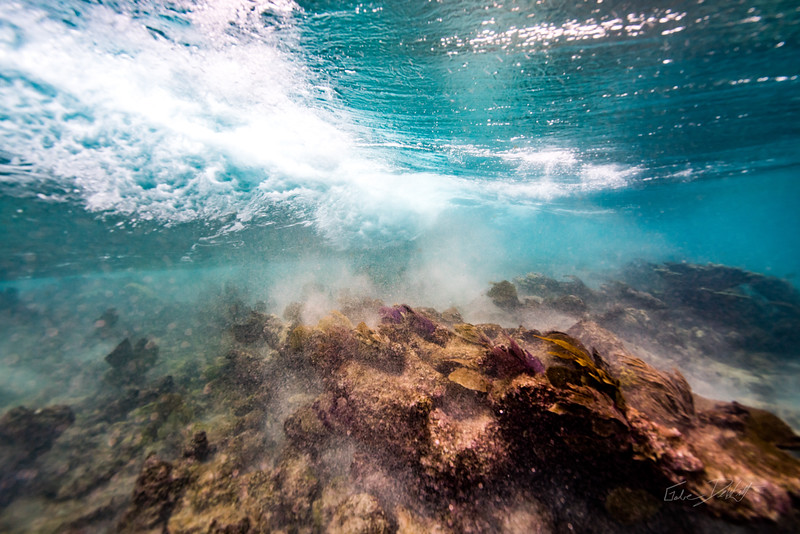 Arrecife-Francisco I-Madero-Snorkeling-Playa-del-carmen-Mexico-Gabe-DeWitt-47