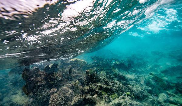 Arrecife-Francisco I-Madero-Snorkeling-Playa-del-carmen-Mexico-Gabe-DeWitt-84