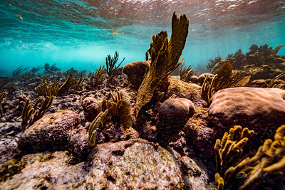 Snorkeling-Playa-del-carmen-Mexico-Arrecife-Francisco I-Madero-Gabe-DeWitt-225