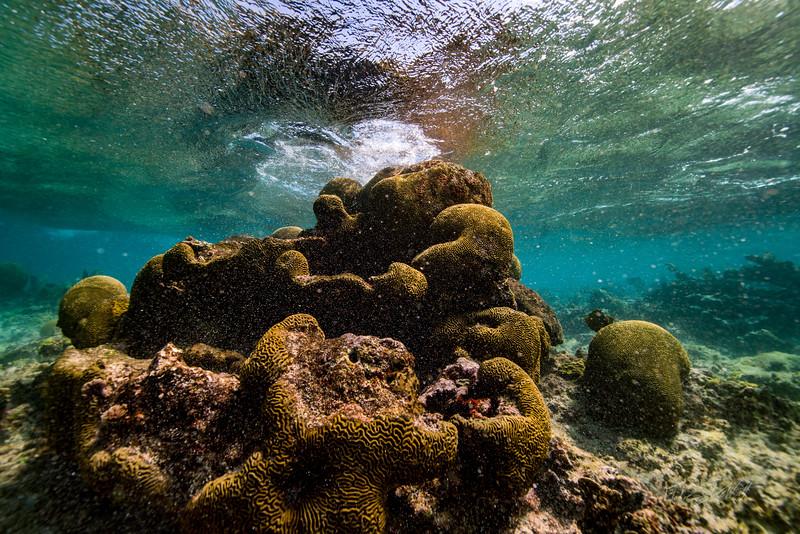 Snorkeling-Playa-del-carmen-Mexico-Arrecife-Francisco I-Madero-Gabe-DeWitt-45