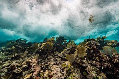 Snorkeling-Playa-del-carmen-Mexico-Arrecife-Francisco I-Madero-Gabe-DeWitt-96