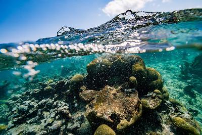 Snorkeling-Playa-del-carmen-Mexico-Arrecife-Francisco I-Madero-Gabe-DeWitt-71