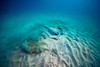 Snorkeling-Playa-del-carmen-Mexico-Arrecife-Francisco I-Madero-Gabe-DeWitt-303