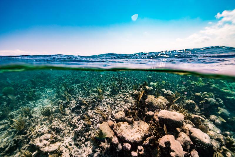 Snorkeling-Playa-del-carmen-Mexico-Arrecife-Francisco I-Madero-Gabe-DeWitt-237