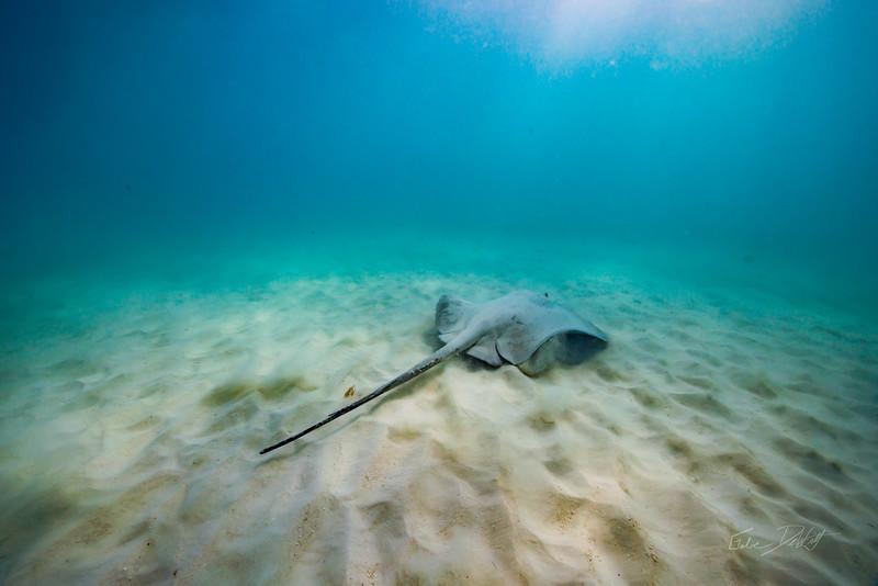 Snorkeling-Playa-del-carmen-Mexico-Arrecife-Francisco I-Madero-Gabe-DeWitt-311