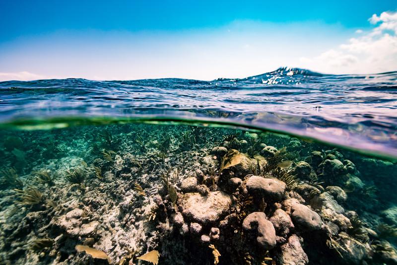 Snorkeling-Playa-del-carmen-Mexico-Arrecife-Francisco I-Madero-Gabe-DeWitt-235