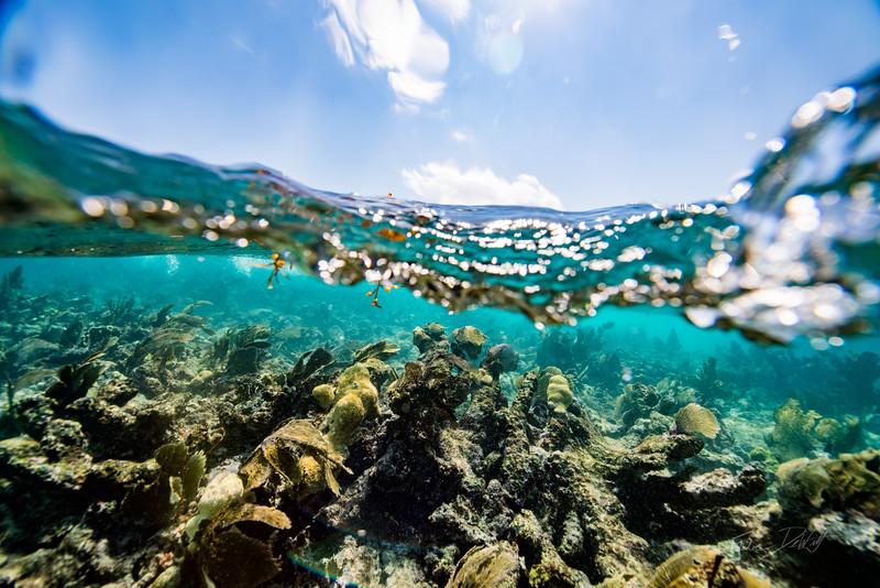 Snorkeling-Playa-del-carmen-Mexico-Arrecife-Francisco I-Madero-Gabe-DeWitt-81