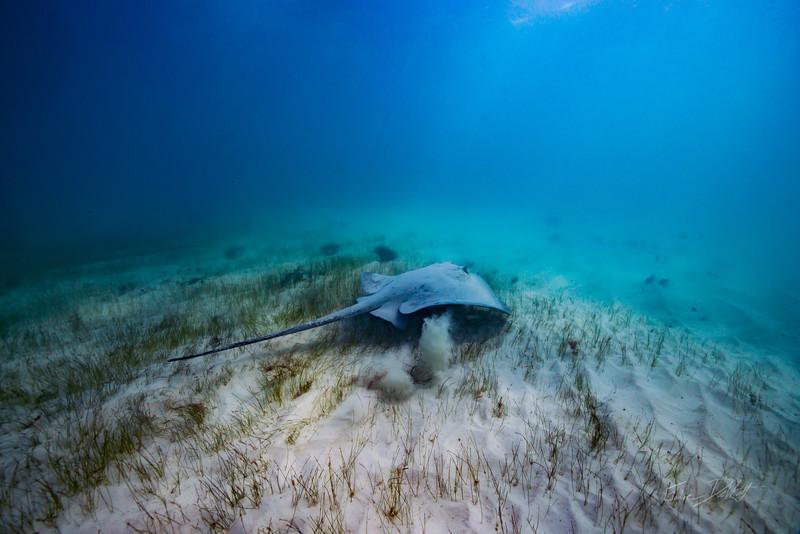 Snorkeling-Playa-del-carmen-Mexico-Arrecife-Francisco I-Madero-Gabe-DeWitt-316