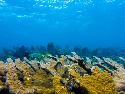 Snorkeling-Playa-del-carmen-Mexico-GoPro-Gabe-DeWitt-156