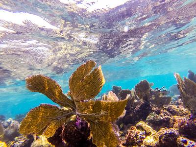Snorkeling-Playa-del-carmen-Mexico-GoPro-Gabe-DeWitt-91