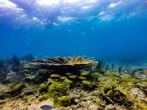 Snorkeling-Playa-del-carmen-Mexico-GoPro-Gabe-DeWitt-121