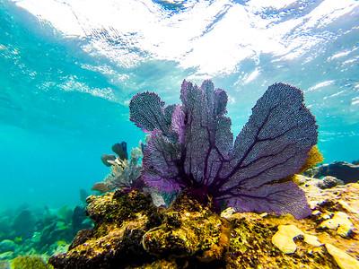Snorkeling-Playa-del-carmen-Mexico-GoPro-Gabe-DeWitt-197