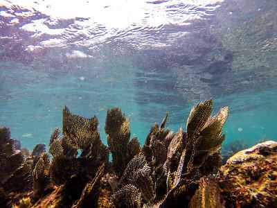 Snorkeling-Playa-del-carmen-Mexico-GoPro-Gabe-DeWitt-32