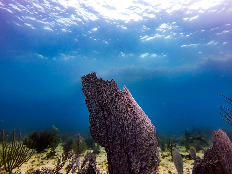 Snorkeling-Playa-del-carmen-Mexico-GoPro-Gabe-DeWitt-19