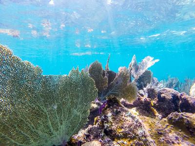 Snorkeling-Playa-del-carmen-Mexico-GoPro-Gabe-DeWitt-86