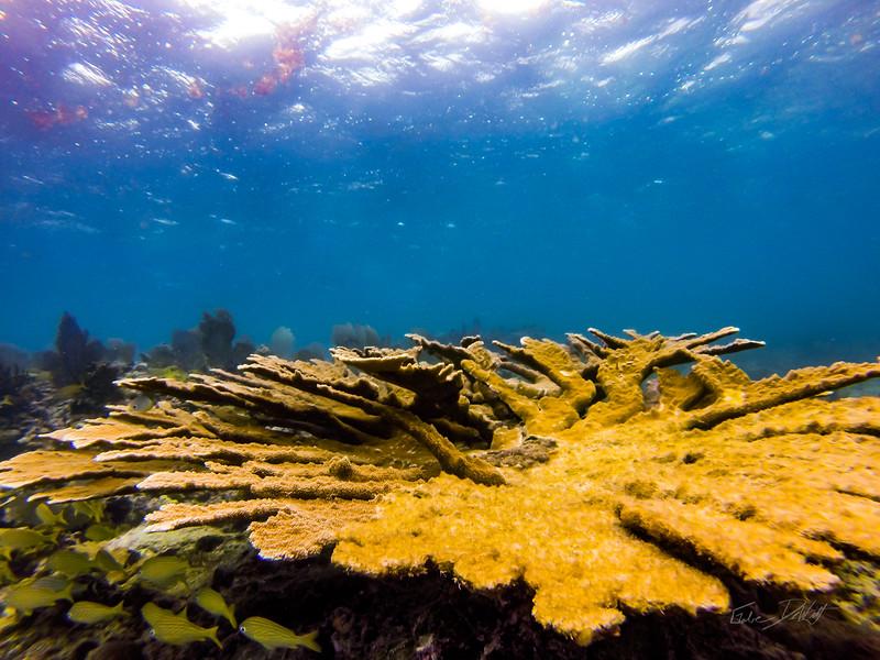Snorkeling-Playa-del-carmen-Mexico-GoPro-Gabe-DeWitt-125