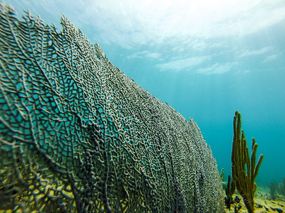 Snorkeling-Playa-del-carmen-Mexico-GoPro-Gabe-DeWitt-24