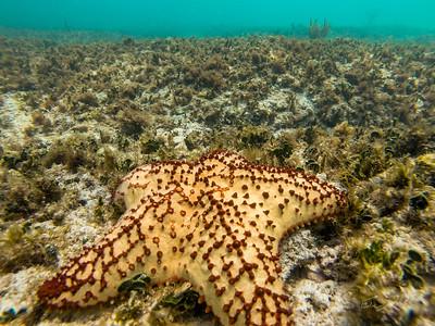Snorkeling-Playa-del-carmen-Mexico-GoPro-Gabe-DeWitt-59