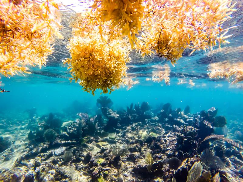 Snorkeling-Playa-del-carmen-Mexico-GoPro-Gabe-DeWitt-3