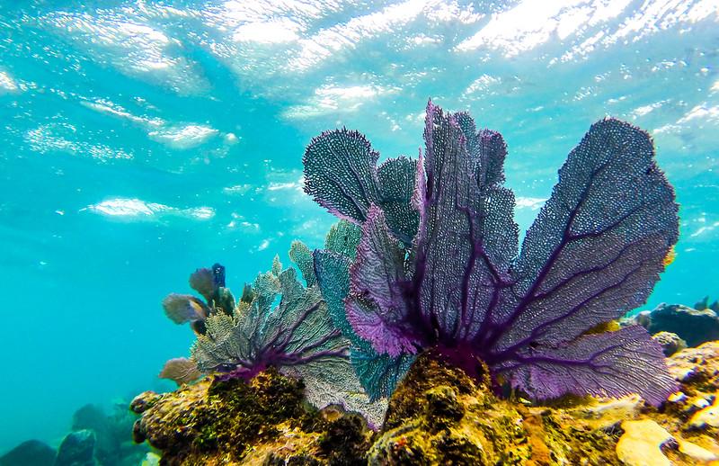 Snorkeling-Playa-del-carmen-Mexico-GoPro-Gabe-DeWitt-196