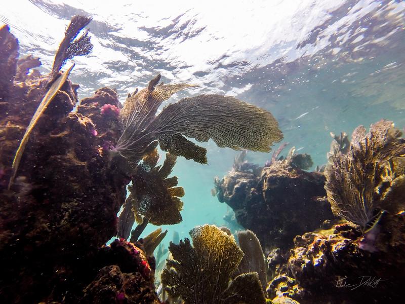 Snorkeling-Playa-del-carmen-Mexico-GoPro-Gabe-DeWitt-31
