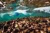 Snorkeling-Playa-del-Carmen-Mexico-Gabe-DeWitt-226