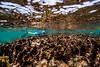 Snorkeling-Playa-del-Carmen-Mexico-Gabe-DeWitt-208
