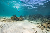 Snorkeling-Playa-del-Carmen-Mexico-Gabe-DeWitt-101