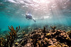 Snorkeling-Playa-del-Carmen-Mexico-Gabe-DeWitt-79