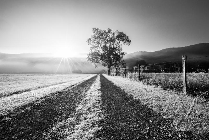 Sunrise-Tree-in-Field-Franklin-WV-114