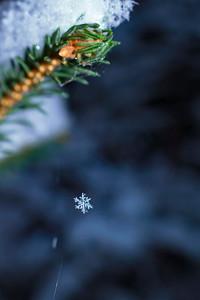 En snöflinga hänger på spindelnät - Snowflake clinging to spider's thread