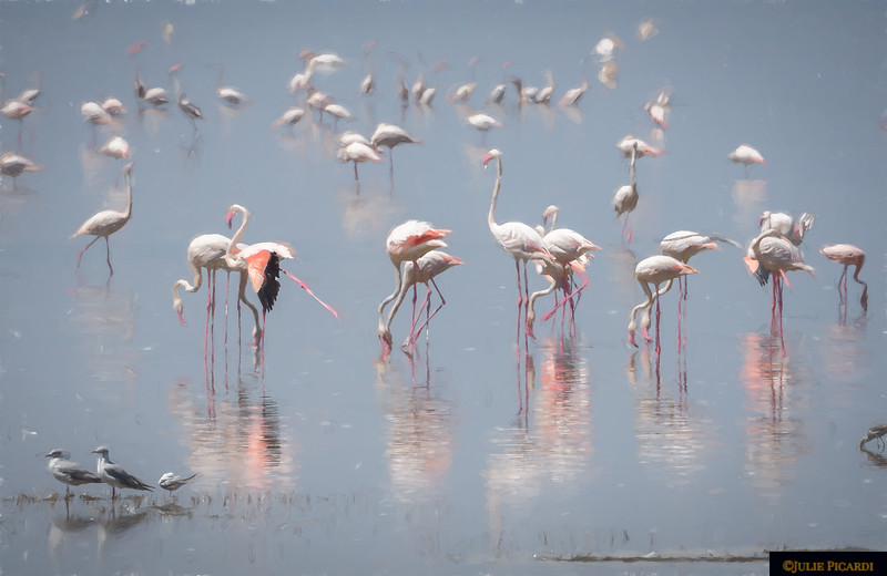 Flamingos at Lake Manyara - Pink Impressionistic