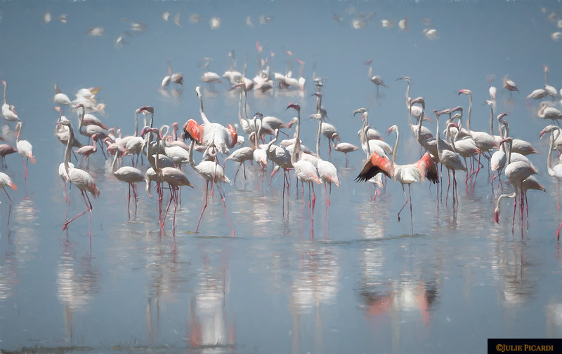 Flamingos at Lake Manyara - Impressionistic