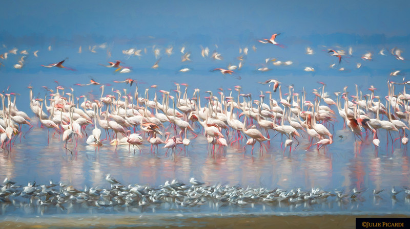 Wading Birds at Lake Manyara National Park - Impressionistic