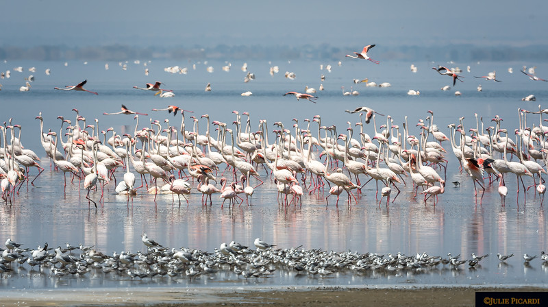 Wading Birds at Lake Manyara National Park