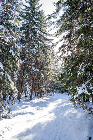 Whitegrass-Crosscountry-Skiing-Canaan-WV-2019-106