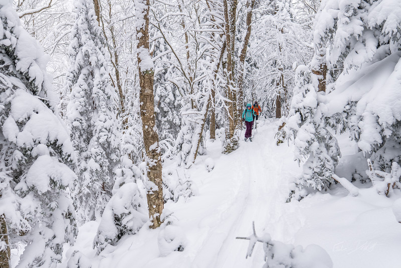 Whitegrass-Crosscountry-Skiing-Canaan-WV-March-2019-92