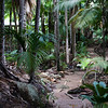 Jungle path in Fond Ferdinand National Park on Praslin island in the Seychelles.