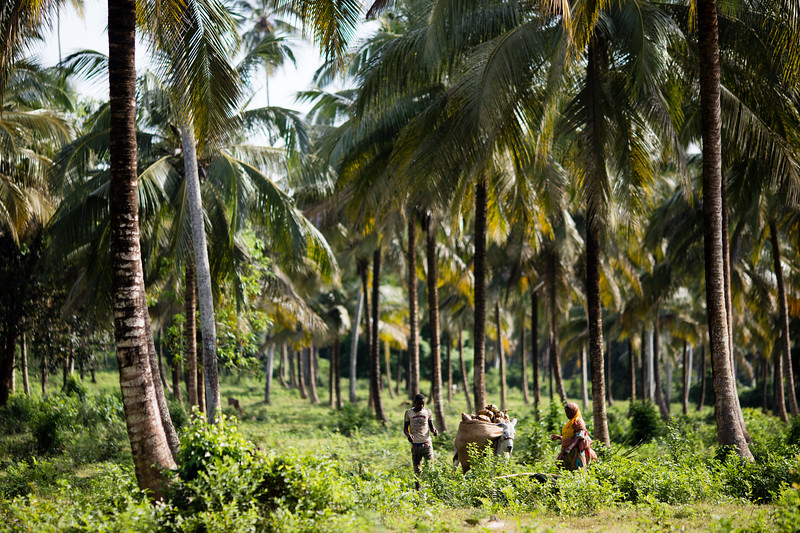 Famers collecting produce in the fields at Magange Spice Farm in Zanzibar, Tanzania.