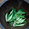 Tapioca leaves prepared for grinding at Maganga Spice Farm in Zanzibar, Tanzania.