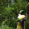 A female farmer collects tapioca leaves for cooking at Maganga Spice Farm in Zanzibar, Tanzania.
