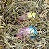WARREN DILLAWAY / Star Beacon<br /> THREE THOUSAND Easter eggs were placed in hay on Friday morning prior to the Conneaut Rotary Club Easter Egg Hunt at the Conneaut Human Resources Center.