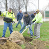 WARREN DILLAWAY / Star Beacon<br /> TIM HOMKALA, Praxair plant supervisor, (second from right) and Jeff Seier, Praxair health and environmental field specialist, work with Ashtabula Township Park employees Bill Scovill (far left), Ken Severino (center front) and Fred Rodriguez (far right) on Tuesday at Lake Shore Park. Prxair donated three green mountain sugar maple trees and two red maple trees to the park.