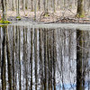 TREES ARE reflected in a pond along a hiking trail at Morgan Swamp.