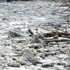 WARREN DILLAWAY / Star Beacon<br /> ICE JAMS the Ashtabula River near the Ashtabula County Mecical  Center on Monday.