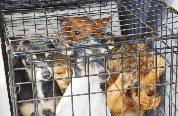 WARREN DILLAWAY / Star Beacon<br /> MORE THAN 23 dogs were removed from an area home after the owner recently died.