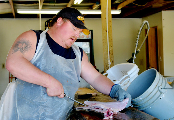 WARREN DILLAWAY / Star Beacon<br /> JASON HEINBAUGH has been cutting fish for more than 10 years for customers returning from charter fishing trips on Lake Erie.