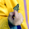 WARREN DILLAWAY / Star Beacon<br /> A BUTTERFLY refuses to leave the finger of Avery Patton, 5, during a butterfly releae at the Ashtabula County Family YMCA Learning Center on Friday morning.